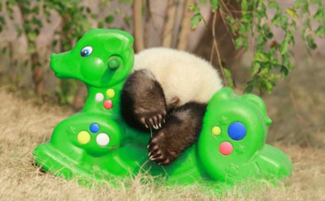 base-investigacion-chengdu-guarderia-osos-panda (16)