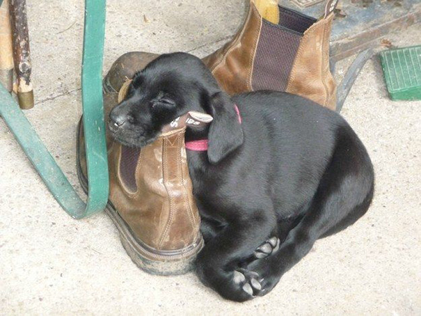 cachorros-perro-durmiendo (7)