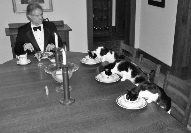cena-elegante-gatos-solo-casa-greatcanine (1)