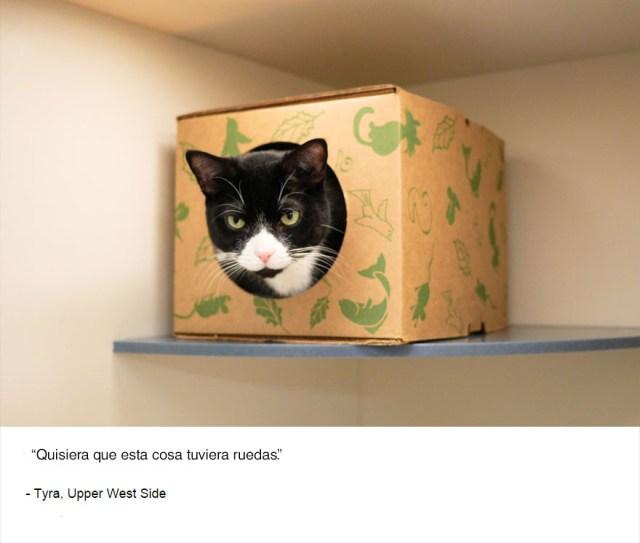 felinos-de-nueva-york-blog-jim-tews-1