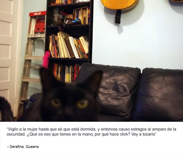 felinos-de-nueva-york-blog-jim-tews-3