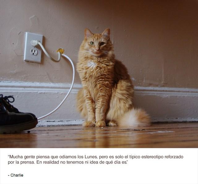 felinos-de-nueva-york-blog-jim-tews-5