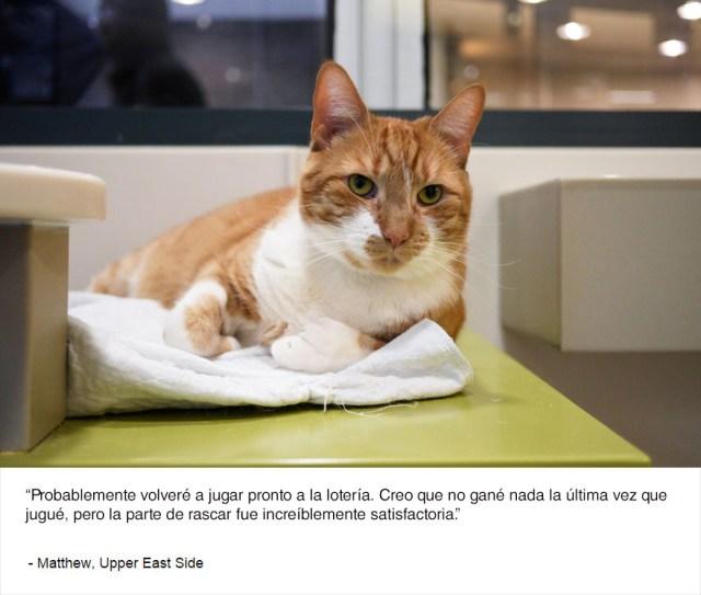 felinos-de-nueva-york-blog-jim-tews-6