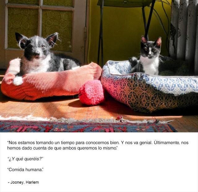 felinos-de-nueva-york-blog-jim-tews-9