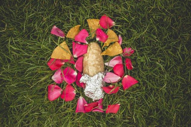 fotos-romanticas-burrito-david-sikorsky (6)