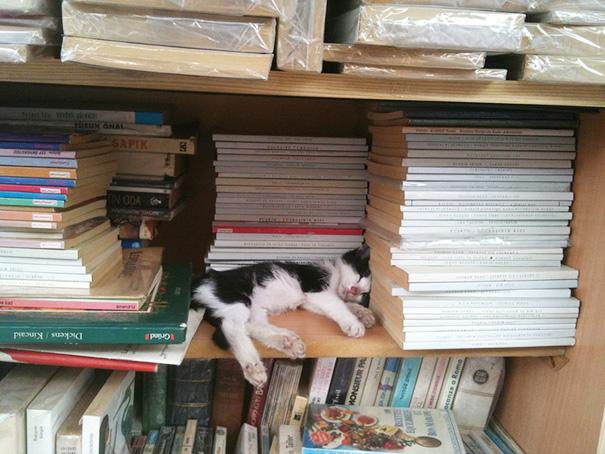 gatos-durmiendo (7)