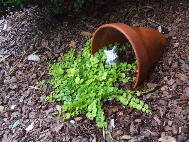 ideas-jardineria-flores-derramadas (10)