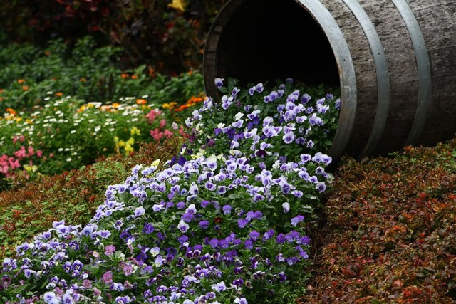 ideas-jardineria-flores-derramadas (9)