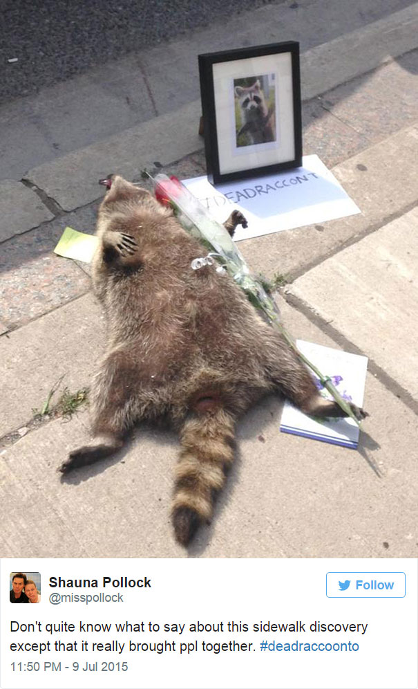 mapache-muerto-homenaje-luto-deadraccoonto (4)