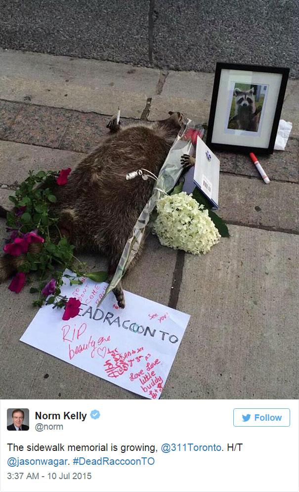 mapache-muerto-homenaje-luto-deadraccoonto (8)