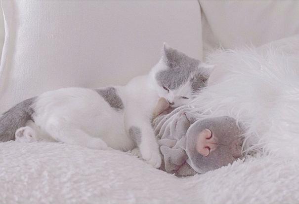 amistad-animal-sharpei-perro-gato-annie-jacobs (8)