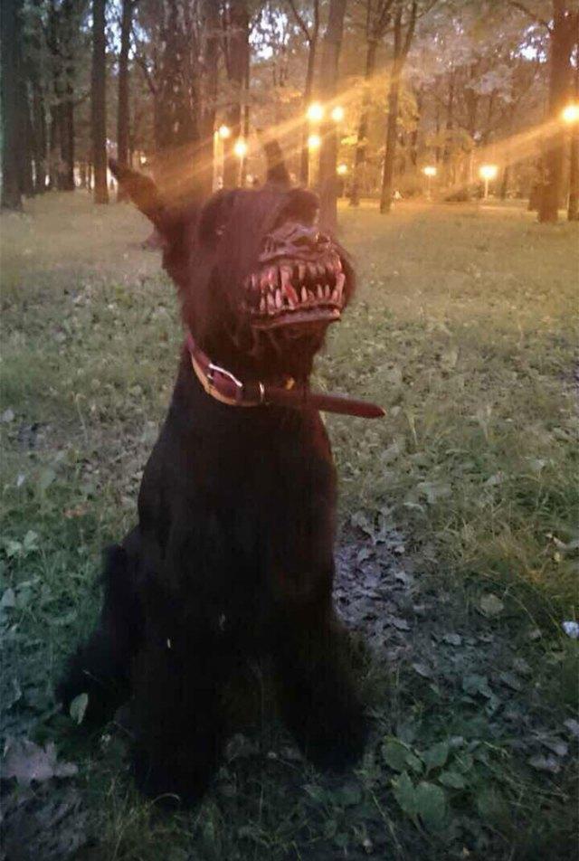 bozal-ruso-perros-licantropo (4)