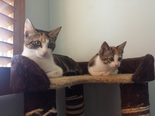 fotos-familia-gatos-gatitos (40)
