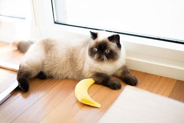 fotos-gatos-celebres-instagram-duenos-eeuu-meow-quarterly (16)