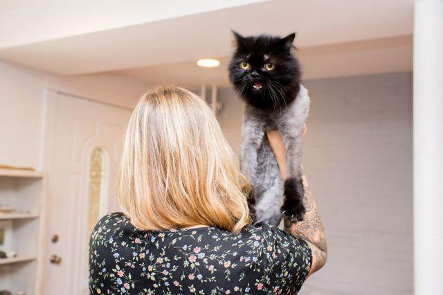 fotos-gatos-celebres-instagram-duenos-eeuu-meow-quarterly (5)