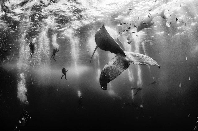 ganadores-concurso-fotos-viajeros-national-geographic-2015 (8)