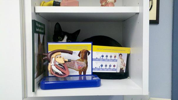 gatos-visitando-veterinario (5)