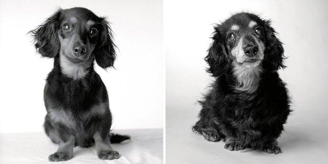 libro-retratos-perros-envejeciendo-amanda-jones (4)