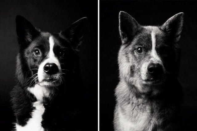 libro-retratos-perros-envejeciendo-amanda-jones (5)