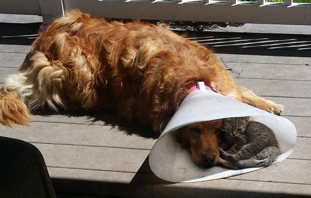 perro-cono-gato-sombra-amistad-animal