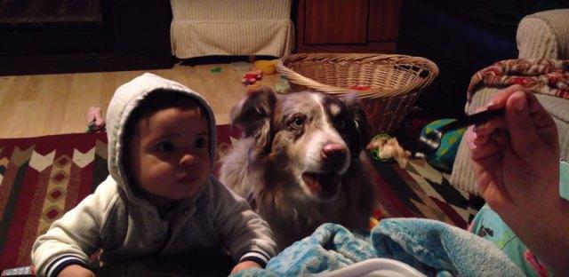 perro-dice-mama-bebe-no (1)