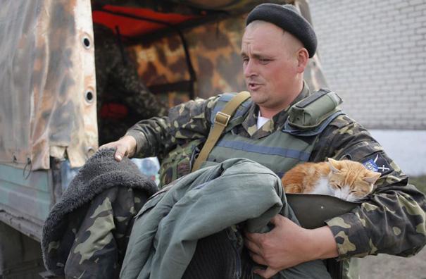 soldados-con-gatos (14)