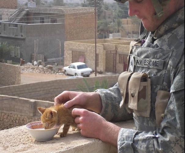 soldados-con-gatos (6)