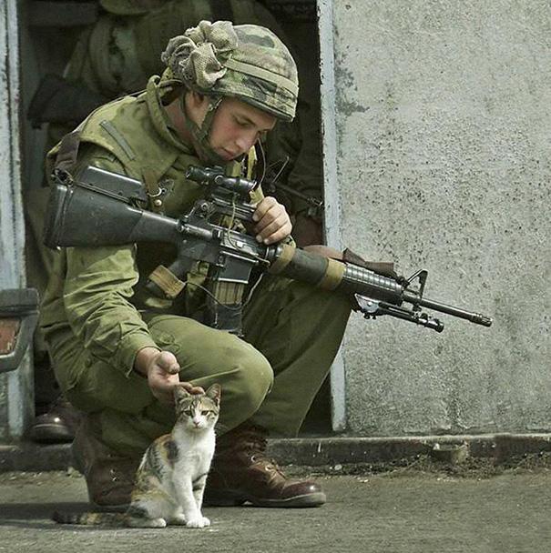 soldados-con-gatos (7)
