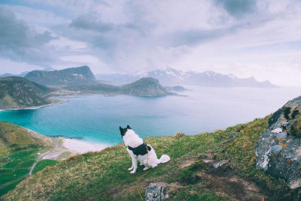 acampada-esqui-noruega-perro-husky-henrik-vikse (5)