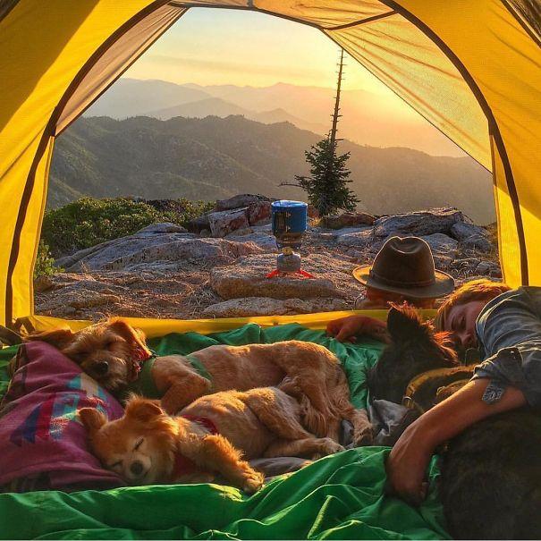 acampar-con-perros-ryan-carter (3)