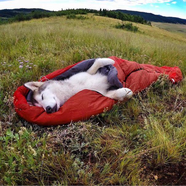 acampar-con-perros-ryan-carter (7)