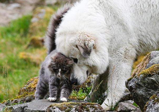 amistad-perros-gatos (15)