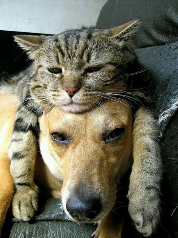 amistad-perros-gatos (17)