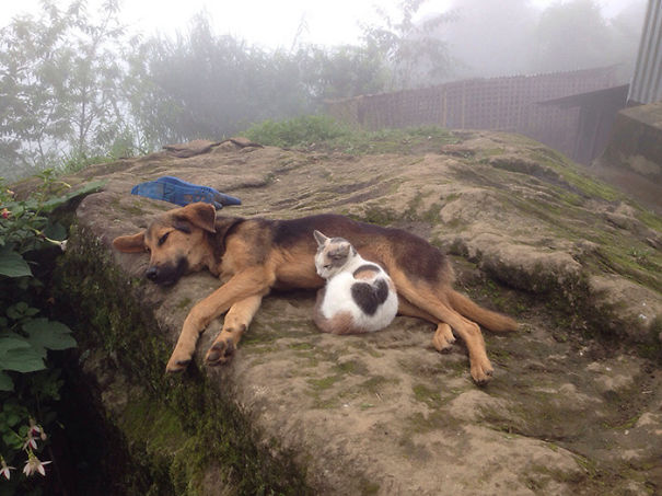 amistad-perros-gatos (2)