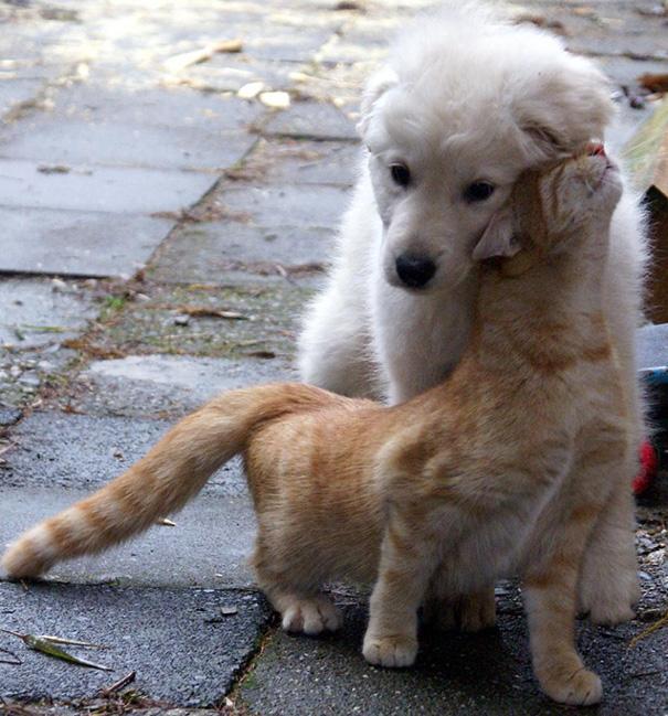 amistad-perros-gatos (4)