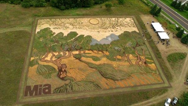 campo-plantado-pintura-van-gogh-olivos-stan-herd (1)