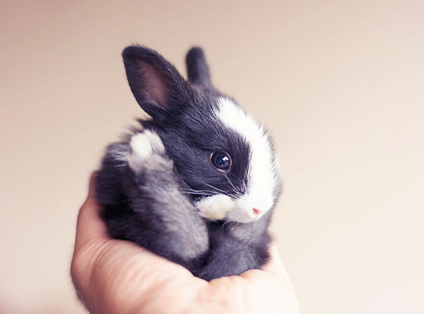 dia-internacional-conejos (15)