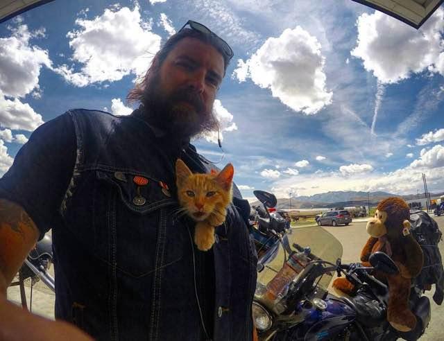 motorista-salva-gato-pat-doody (8)