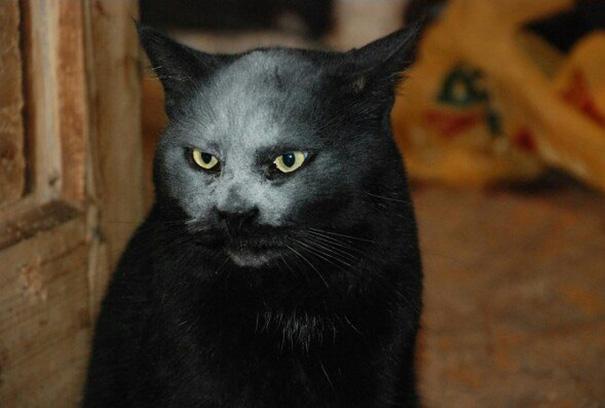 accidente-harina-gato-demonio (1)