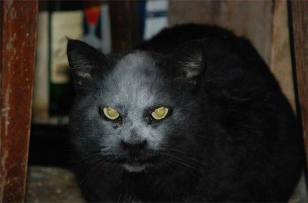 accidente-harina-gato-demonio (2)