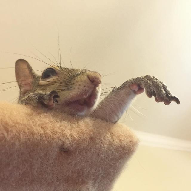 ardilla-jill-rescatada-fotogenica (18)