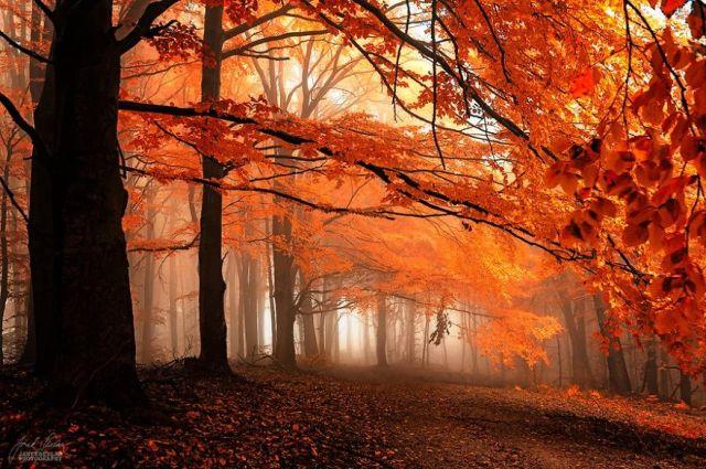 fotografia-bosques-otono-janek-sedlar (20)