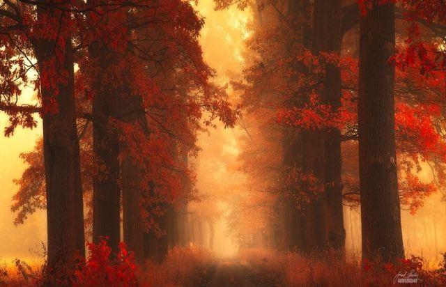 fotografia-bosques-otono-janek-sedlar (8)