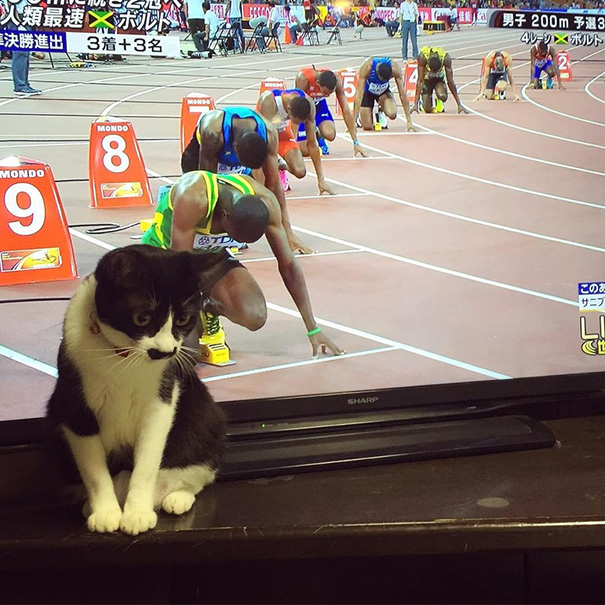 fotos-gatos-momento-justo (12)