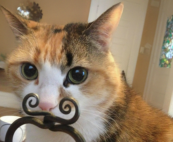 fotos-gatos-momento-justo (2)