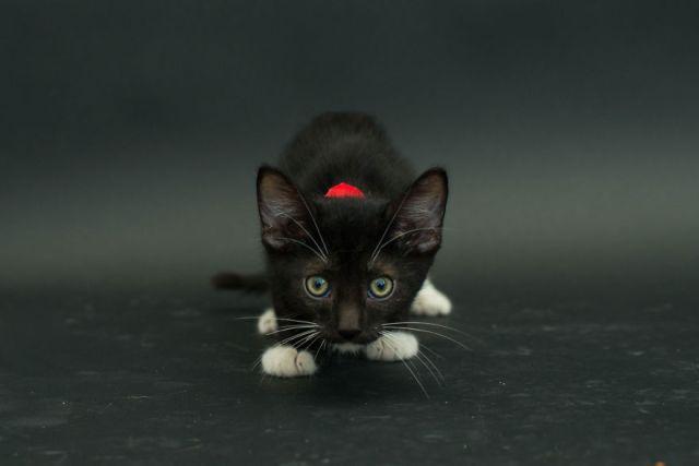fotos-gatos-negros-adopcion (3)