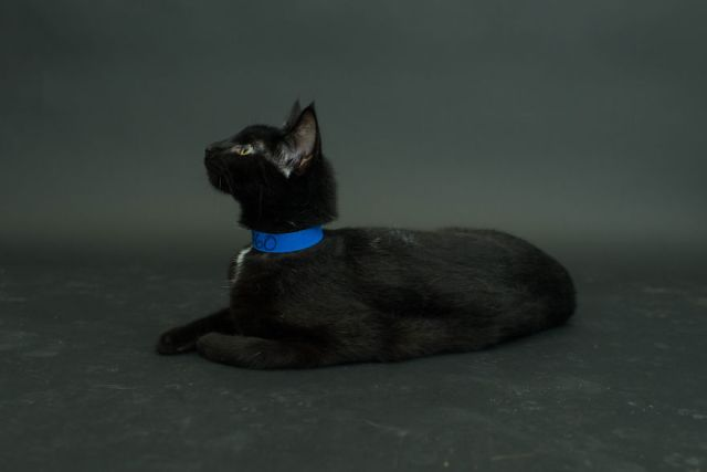 fotos-gatos-negros-adopcion (7)
