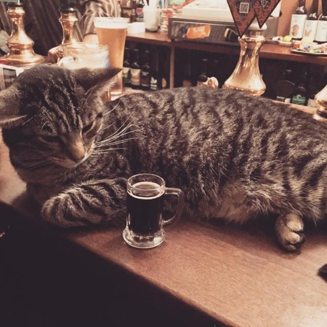 bar-gatos-pub-bag-of-nails-bristol (10)
