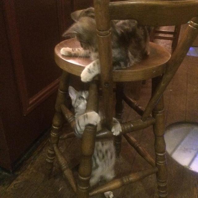 bar-gatos-pub-bag-of-nails-bristol (3)