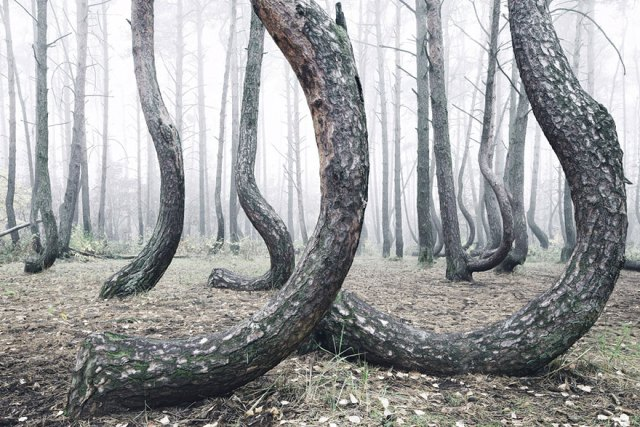 bosque-torcido-krzywy-las-kilian-schonberger-poland-polonia (4)